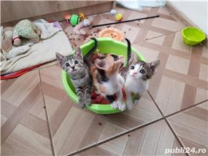 Donez 3 pui de pisica - imagine 1