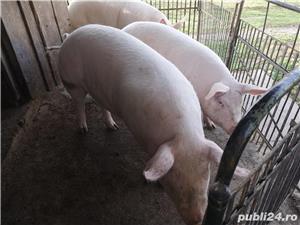 Porci de vânzare 12/kg negociabil  - imagine 4