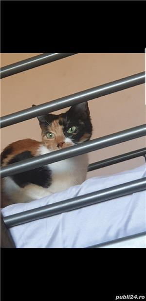 Pisica pentru adopție  - imagine 5