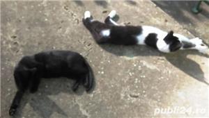 Pisici gratis urgent - imagine 4