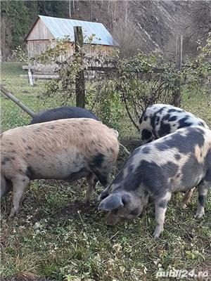 Porci de casa - imagine 2