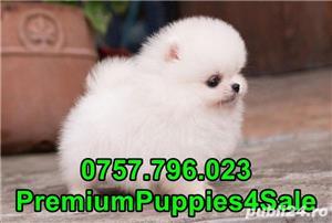 Pomeranian calitate premium- livrare la bucuresti-  - imagine 1