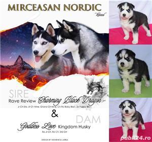 Cățeluși Husky pedigree A - imagine 1