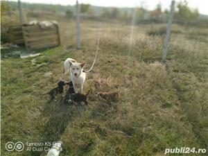 Husky crem cu pui - imagine 4