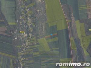 Teren arabil 4.900 mp sat Letcani jud. Iasi ID 7171 - imagine 8
