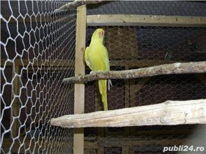 vand papagalii - imagine 3