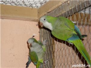vand papagalii - imagine 4