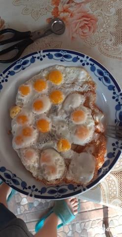 Vand oua de prepelita - imagine 4