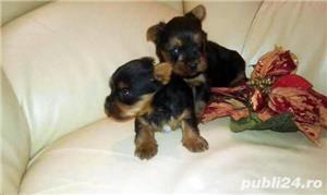 Yorkshire Terrier  Mini Toy - imagine 2