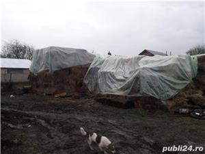 Vand 140 de capre tractor presa cositoare baloti - imagine 5