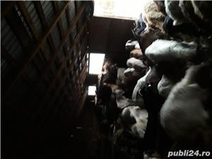 Vand 140 de capre tractor presa cositoare baloti - imagine 2