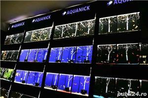 Pesti de acvariu - Aquanick. - imagine 1