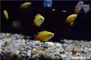 Pesti de acvariu - Aquanick. - imagine 7