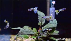 Pesti de acvariu - Aquanick. - imagine 3