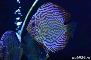 Pesti de acvariu - Aquanick. - imagine 6