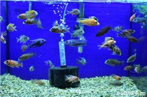 Pesti de acvariu - Aquanick. - imagine 10