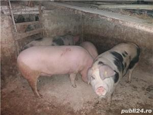 Vand porci de carne - imagine 1
