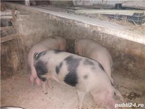 Vand porci de carne - imagine 4