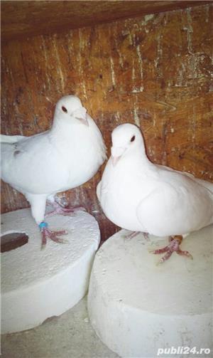 Porumbei ornament - imagine 5