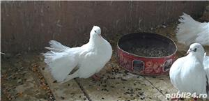 Vand porumbei rotati  - imagine 4