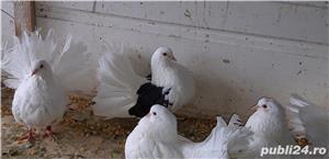 Vand porumbei rotati  - imagine 1