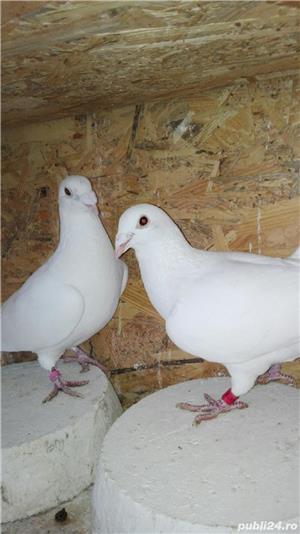 Porumbei ornament - imagine 6