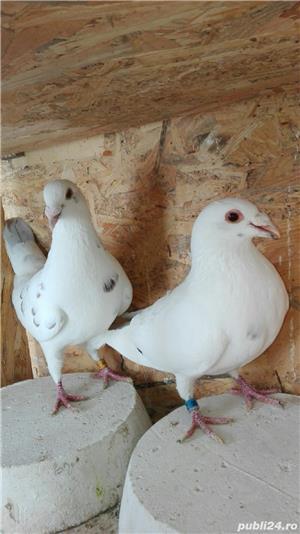 Porumbei ornament - imagine 7