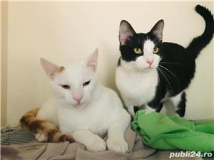 Micky si Tomita va roaga sa-i luati acasa - imagine 1