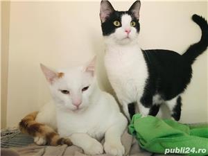 Micky si Tomita va roaga sa-i luati acasa - imagine 4