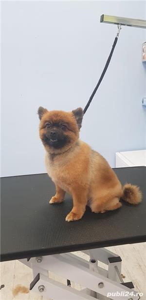 Tuns caini Timisoara salon canin - imagine 1