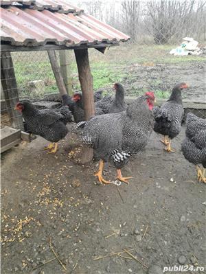 Ouă pentru incubat diferite rase - imagine 5