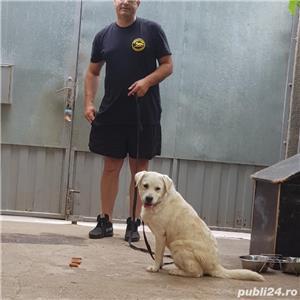 Dresaj canin - imagine 7