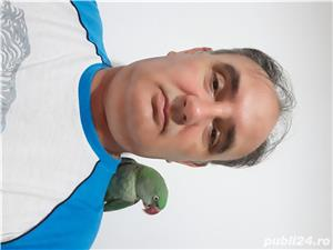 Papagal marele alexandru - imagine 3