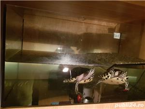 Vand acvariu (cu insulita) cu 2 broaște testoase 400 lei - imagine 3