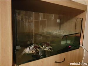 Vand acvariu (cu insulita) cu 2 broaște testoase 400 lei - imagine 2
