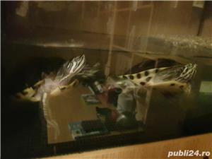 Vand acvariu (cu insulita) cu 2 broaște testoase 400 lei - imagine 4
