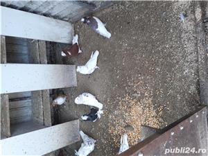 Porumbei - imagine 5