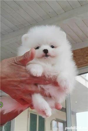 Pomeranian Boo Alb, mini Toy - imagine 2