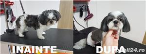 Salon canin tuns caini Timisoara - imagine 5