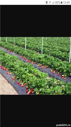 munca in agricultura - imagine 3