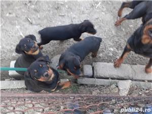 Catei Rottweiler - imagine 2