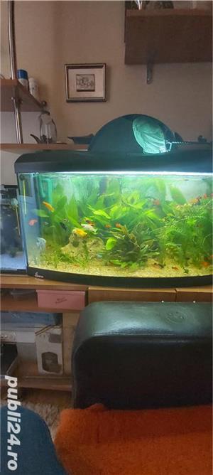 Vand trei acvarii. - imagine 2