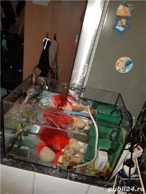 Acvariu pești  - imagine 2
