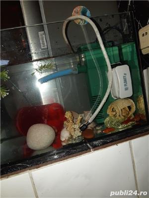 Acvariu pești  - imagine 3