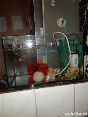 Acvariu pești  - imagine 5