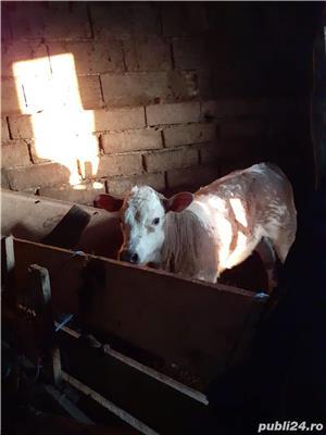 Vând vitea de carne - imagine 1