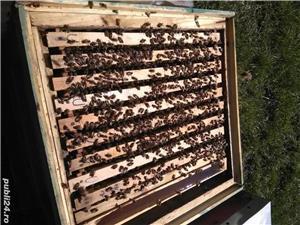 Vând familii si roiuri de albine - imagine 3