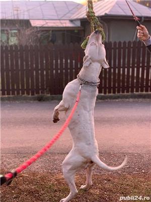 Monta Dog Argentinian  - imagine 1