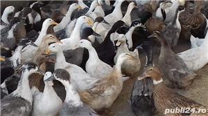 rate polare si stil pinguin - imagine 4