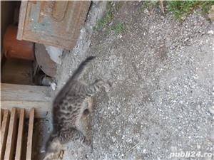 Pui de pisica pt adoptie - imagine 2